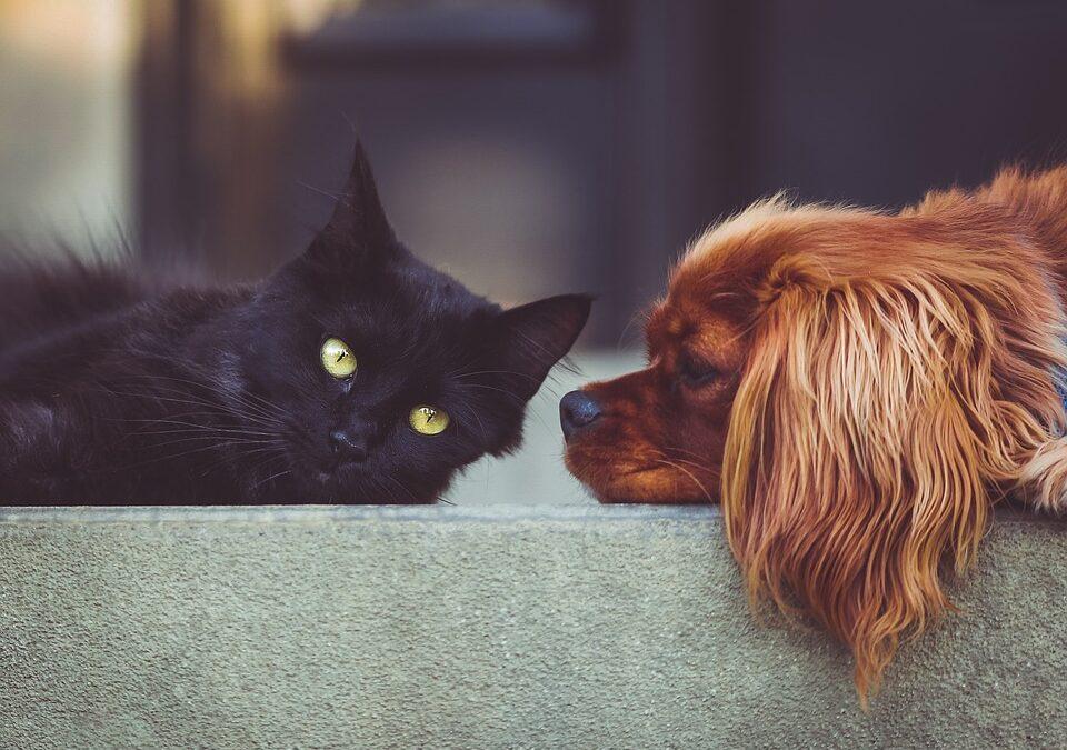 Nos vamos a divorciar, ¿quién se queda con el perro?
